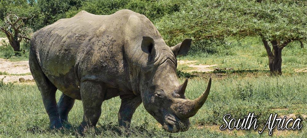 header-nosorozec.jpg